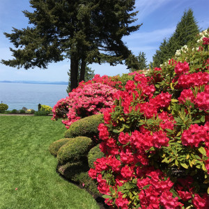 A gorgeous garden from the Mount Arrowsmith Rhododendron Society's annual garden tour.